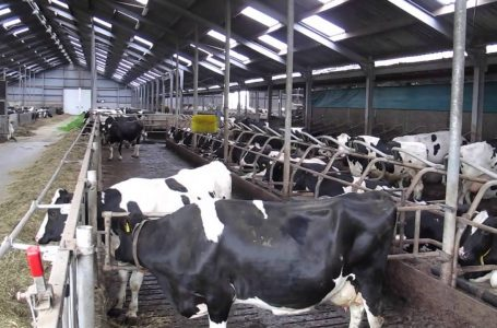 Busia County Seals Deal for the Construction of Two Multi Million Dairy Parks